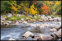 Wassatotaquoik Stream and hardwood trees in autumn. Katahdin Woods and Waters National Monument, Maine, USA ( color)
