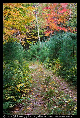 Overgroth former Wassatotaquoik Road. Katahdin Woods and Waters National Monument, Maine, USA (color)