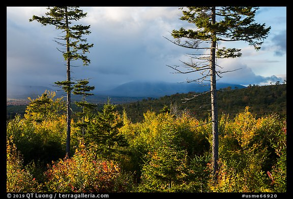 Spruce and hardwood trees, late afternoon. Katahdin Woods and Waters National Monument, Maine, USA (color)