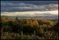 Millinocket Lake from Overlook, evening. Katahdin Woods and Waters National Monument, Maine, USA ( color)