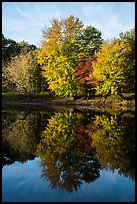 Trees in autunm foliage reflected in East Branch Penobscot River. Katahdin Woods and Waters National Monument, Maine, USA ( color)