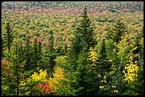 Spruce and valley covered by northern hardwood trees in autumn. Katahdin Woods and Waters National Monument, Maine, USA ( color)