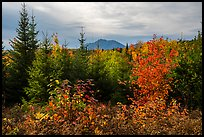 First view of Katahdin in autumn. Katahdin Woods and Waters National Monument, Maine, USA ( color)