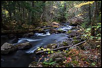 Hardwood forest and Katahdin Brook in autunm. Katahdin Woods and Waters National Monument, Maine, USA ( color)