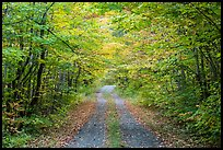 Gravel road and tunnel of trees in autumn. Katahdin Woods and Waters National Monument, Maine, USA ( color)