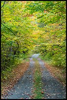 Road in autumn forest. Katahdin Woods and Waters National Monument, Maine, USA ( color)
