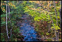 Stream in autumn forest. Katahdin Woods and Waters National Monument, Maine, USA ( color)