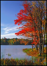 Lake with red maple in fall colors, Hiawatha National Forest. Upper Michigan Peninsula, USA ( color)
