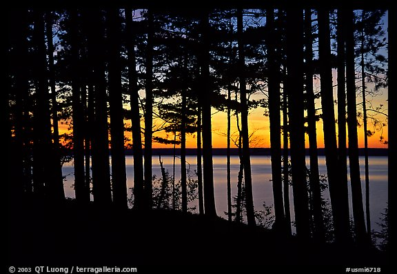 Lake Superior seen through dense trees at sunset,  Pictured Rocks National Lakeshore. Upper Michigan Peninsula, USA (color)
