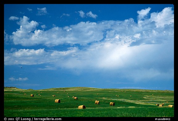 Field of grasses with hay rolls and big sky. North Dakota, USA (color)