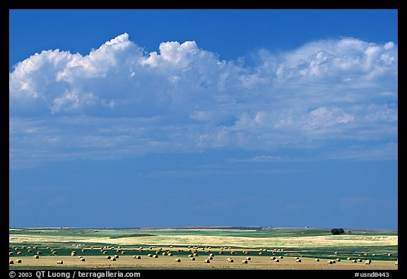 Yellow field with rolls of hay. North Dakota, USA (color)