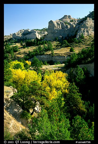 Trees and sandstone cliff. South Dakota, USA (color)