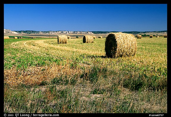 Hay rolls. Nebraska, USA (color)