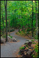 Path in forest, Franconia Notch State Park. New Hampshire, USA ( color)