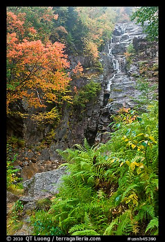 Ferns, cascade, and trees in autumn foliage, Crawford Notch State Park. New Hampshire, USA (color)