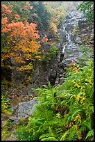 Ferns, cascade, and trees in autumn foliage, Crawford Notch State Park. New Hampshire, USA ( color)