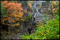 Ferns, watefall, and trees in fall colors, White Mountain National Forest. New Hampshire, USA ( color)