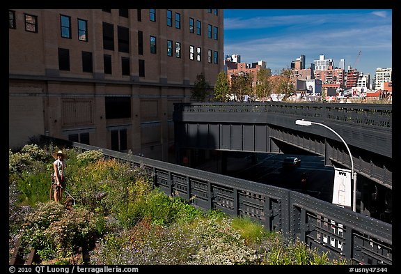 Garden on the High Line. NYC, New York, USA