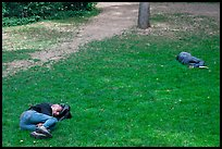Men sleeping on lawn, Central Park. NYC, New York, USA (color)
