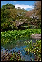 Aquatic plants and stone bridge, Central Park. NYC, New York, USA ( color)