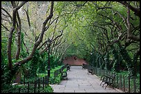 Crabapple Allees, Conservatory Garden. NYC, New York, USA (color)