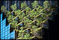 Hanging gardens on Trump Tower. NYC, New York, USA