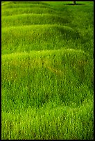Grassy mounds, African Burial Ground National Monument. NYC, New York, USA ( color)