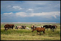 Free range horses, Pine Ridge Indian Reservation. South Dakota, USA (color)