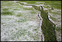 Hailstones form pattern in meadow, Black Hills National Forest. Black Hills, South Dakota, USA ( color)
