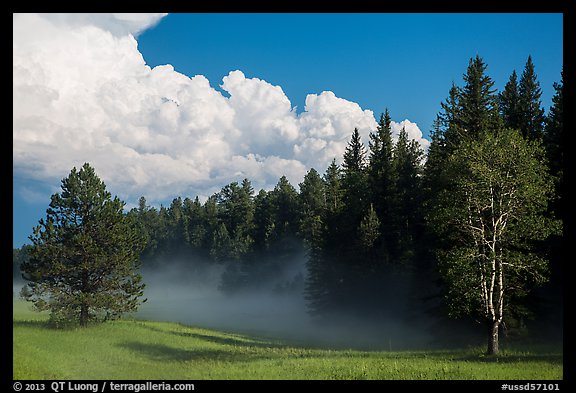 Forest, meadow, and cumulonimbus, Black Hills National Forest. Black Hills, South Dakota, USA (color)