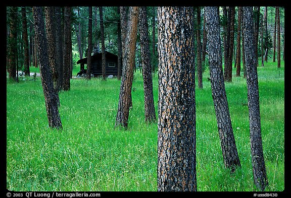 Cabins in forest, Custer State Park. Black Hills, South Dakota, USA (color)
