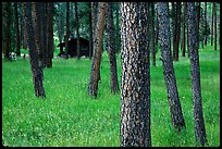 Cabins in forest, Custer State Park. Black Hills, South Dakota, USA