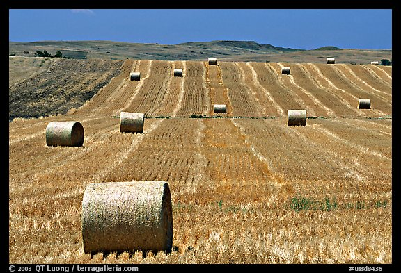 Field and rolls of hay. South Dakota, USA (color)