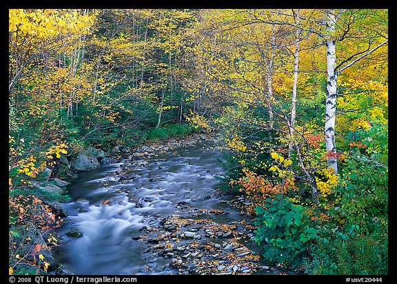 Stream and birch trees. Vermont, New England, USA (color)