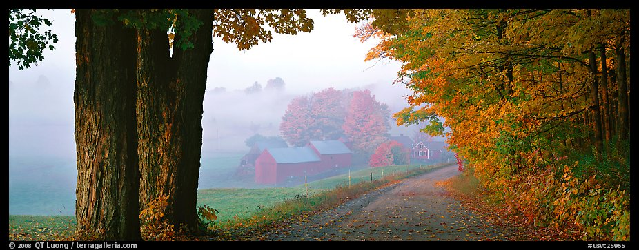 Rural view with road and farm in autumn fog. Vermont, New England, USA (color)