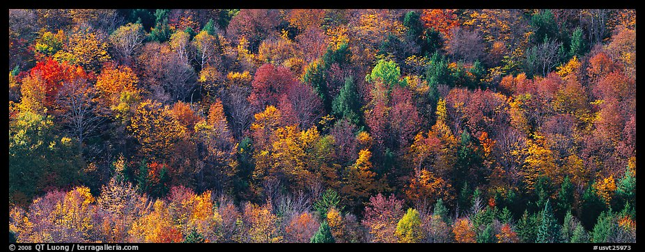 Autumn landscape with trees on hillside. Vermont, New England, USA (color)