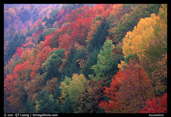 Multicolored trees on hill, Quechee Gorge. Vermont, New England, USA (color)