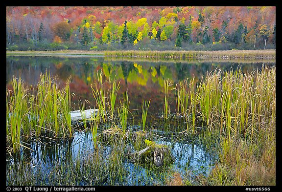 Reeds and pond, Green Mountains. Vermont, New England, USA (color)