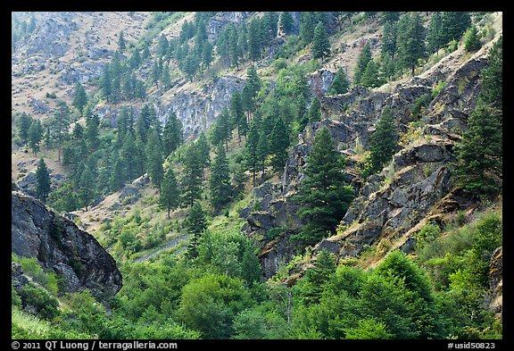 Side canyon with trees. Hells Canyon National Recreation Area, Idaho and Oregon, USA