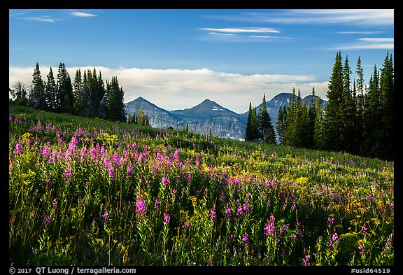 Late summer wildflowers and mountains, Face Trail. Jedediah Smith Wilderness,  Caribou-Targhee National Forest, Idaho, USA (color)