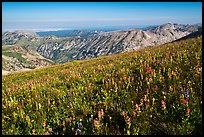 Multicolored wildflower carpet near Table Mountain. Jedediah Smith Wilderness,  Caribou-Targhee National Forest, Idaho, USA ( color)