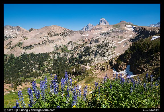 Lupine, Table Mountain ridge, and Tetons peeking. Jedediah Smith Wilderness,  Caribou-Targhee National Forest, Idaho, USA (color)