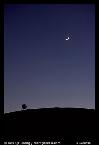 Tree on cinder cone curve, crescent moon, Craters of the Moon National Monument. Idaho, USA (color)