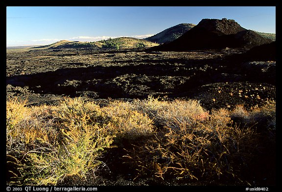 Brush in lava field, Craters of the Moon National Monument. Idaho, USA (color)