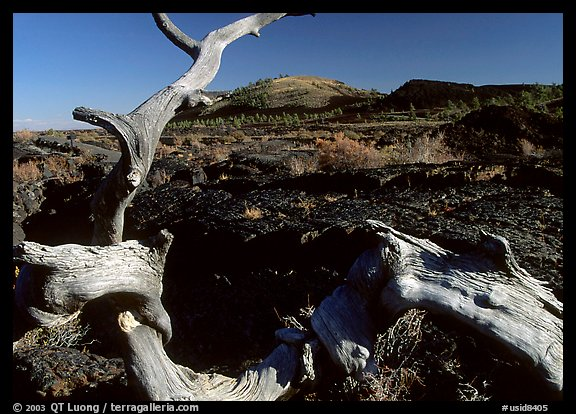 Fallen tree and lava field. Craters of the Moon National Monument and Preserve, Idaho, USA (color)