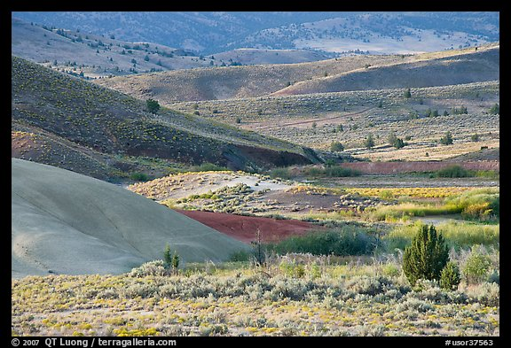 Sagebrush and ash hills. John Day Fossils Bed National Monument, Oregon, USA (color)