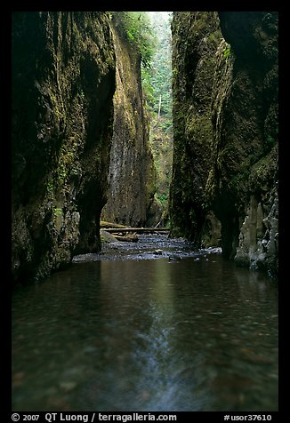 Stream and slot-like canyon walls, Oneonta Gorge. Columbia River Gorge, Oregon, USA (color)