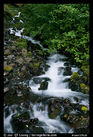 Wahkeena Falls. Columbia River Gorge, Oregon, USA (color)