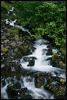 Wahkeena Falls. Columbia River Gorge, Oregon, USA ( color)