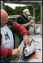 Men cleaning just caught fish. Newport, Oregon, USA (color)